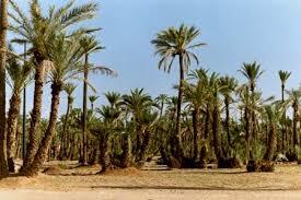 التوقيع على اتفاق ثلاثي الأطراف بين المغرب ومنظمة الفاو  ومالي يهم الميدان الفلاحي
