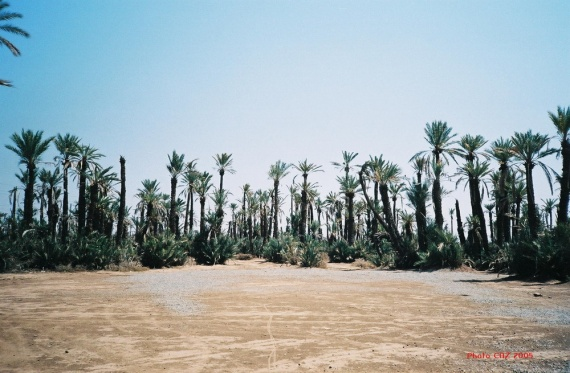 palmeraie